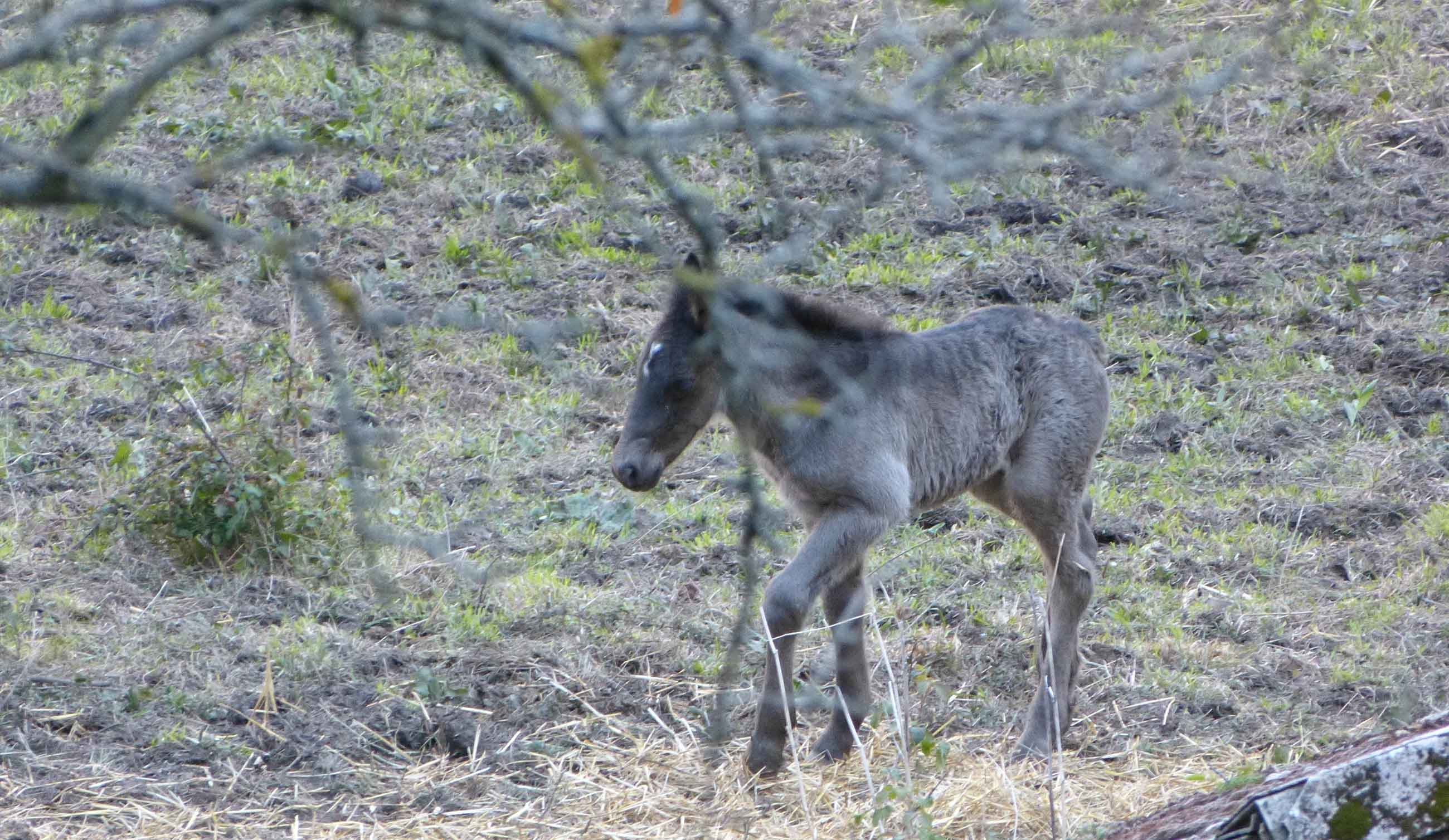 Foal born in the village